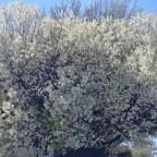 Spring flowers, Mar/Apr 2020