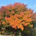 Fall foliage, Oct/Nov 2020