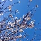 It's springtime in Texas: returning to hope and to the blog